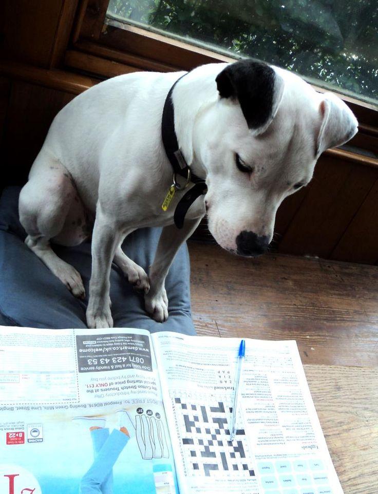 Pixel (was Jasmine) from Leeds - Dogs Trust