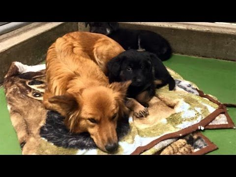 Rescue Dog Breaks Out Of Her Kennel During Night To Comfort New Foster Puppies - YouTube