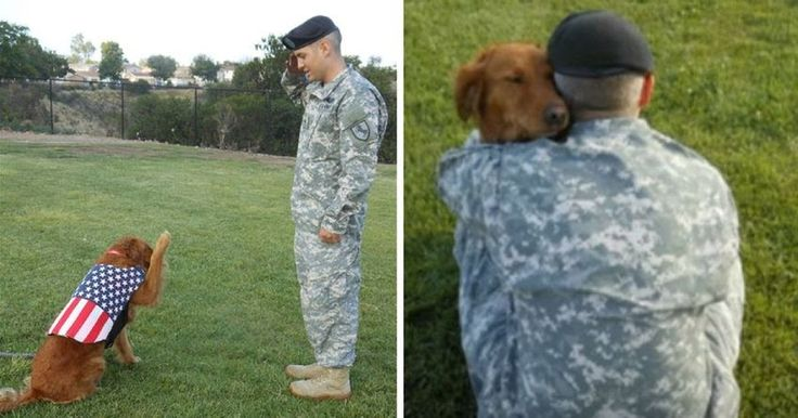 Beloved Therapy Dog Saves Army Veteran From Heartbreaking Suicide Attempt