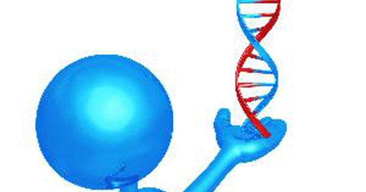 Cómo hacer un modelo de ADN. Cómo hacer un modelo de ADN. El ADN es el componente básico de todo ser viviente. El ADN es tan importante que todas las escuelas requieren que los estudiantes entiendan cómo funciona. Crear modelos para demostrar el proceso es un proyecto común en los laboratorios de biología. Este modelo hace que dicho proceso sea fácil de comprender.