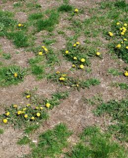 Comment se débarrasser des mauvaises herbes naturellement? - Actualités météo - Météocity