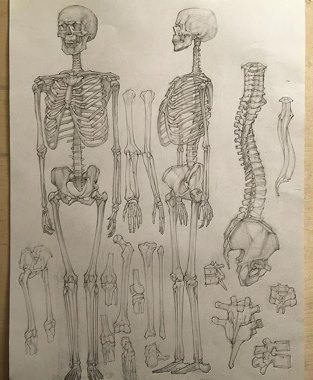 #рисунок #мархи #академическийрисунок #скелет #череп #кости #карандаш #графика #draw #skull #skeleton #structure #pencil #graphic #marhi #bones academicdrawing