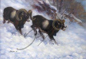 Rohanó muflonok