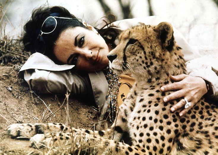 IlPost - Liz Taylor e ghepardo - L'attrice inglese Liz Taylor con un ghepardo al parco Kruger, in Botswana, nell'ottobre del 1975.  (AP Photo)