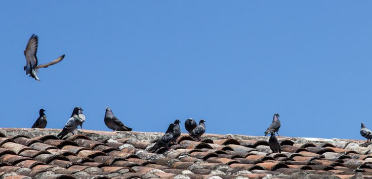 4 Pests Causing Scratching Noises In Your Roof Scratching Noises In The Roof Can Be Bothersome Especially In The Dead Of Night Pests Noise Signs Of Termites