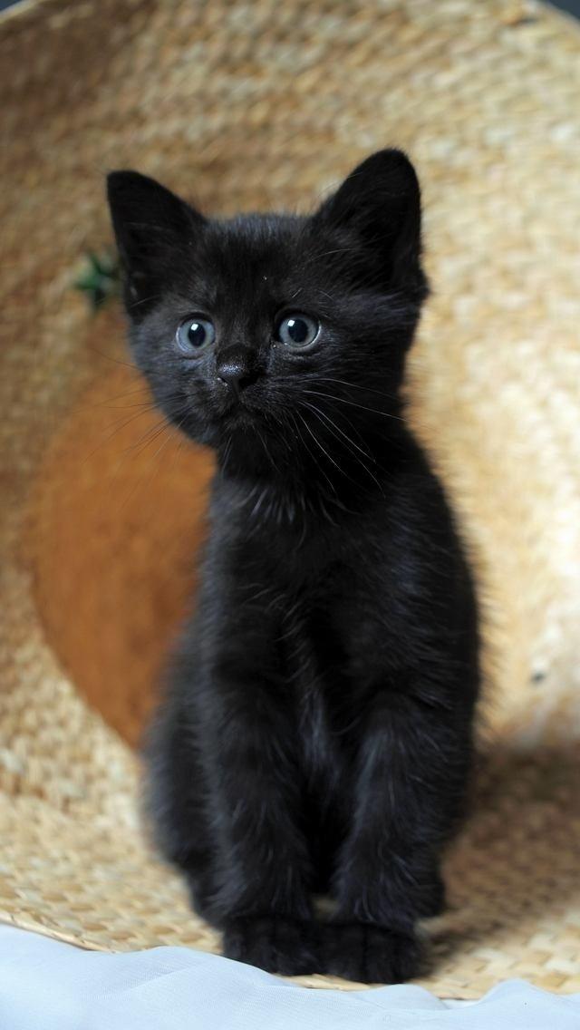 awww, black cutie with blue eyes.