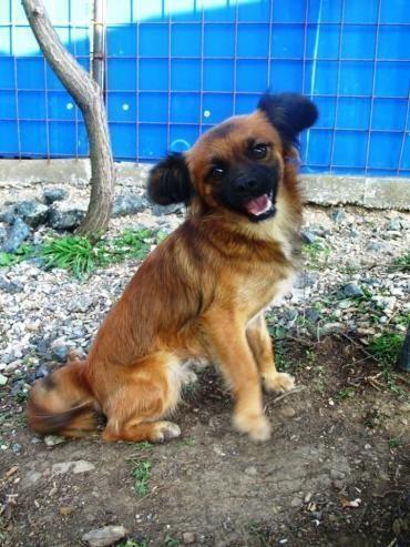 Hund, Mischling (Mischling, Hündin, 2 Jahre) in Schwabach