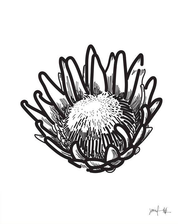 Best 25+ Protea art ideas on Pinterest | Protea flower ...
