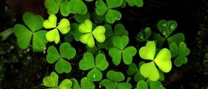 Green Consumerism ~ Naturskyddsföreningen