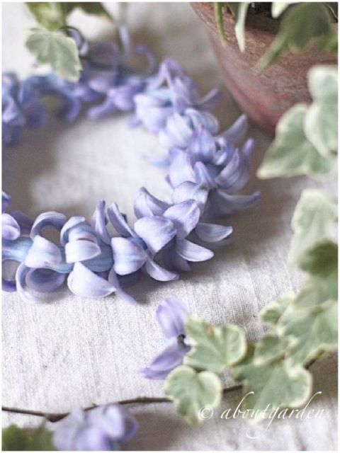 :) coroncina giacinto