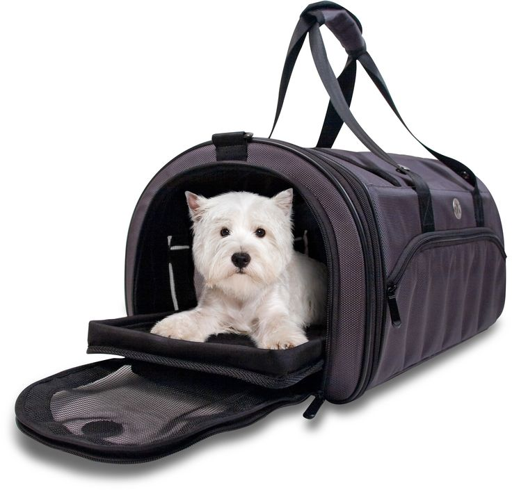 Best Airline Approved Dog Carrier With Wheels