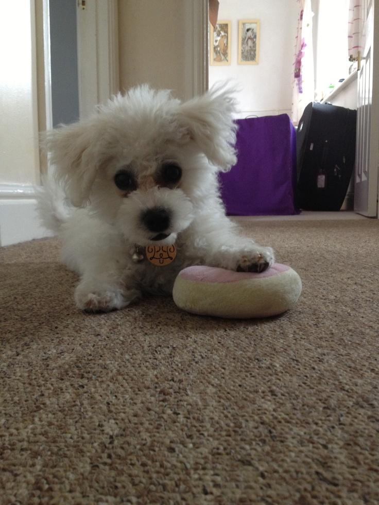 Precious and her toy doughnut