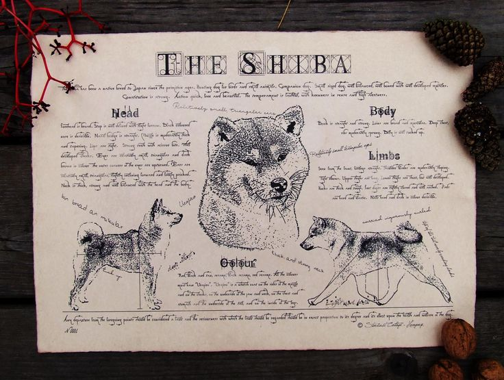 Antique styled dog standard - Shiba by Creativedoglover on Etsy