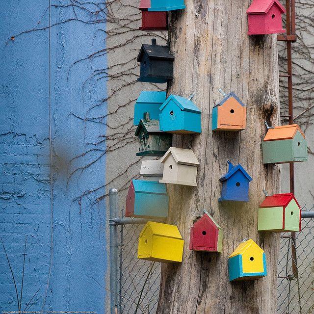 Colorful houses Neighborhood for the birds