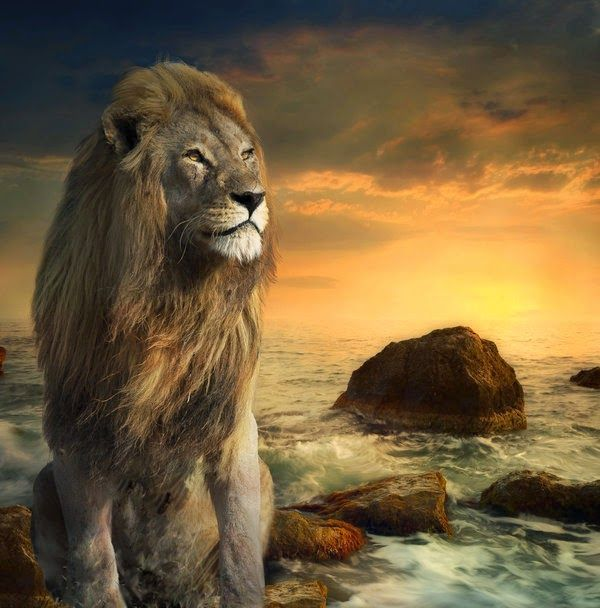Warriors Of The Rainbow Online Subtitrat Hd: 401 Best Images About Lion Of.Judah On Pinterest