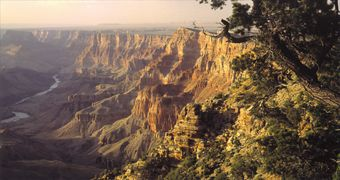 Grand Canyon South Rim National Park with Luxury Motor Coach Tour and optional IMAX movie and Helicopter flight (Bus)