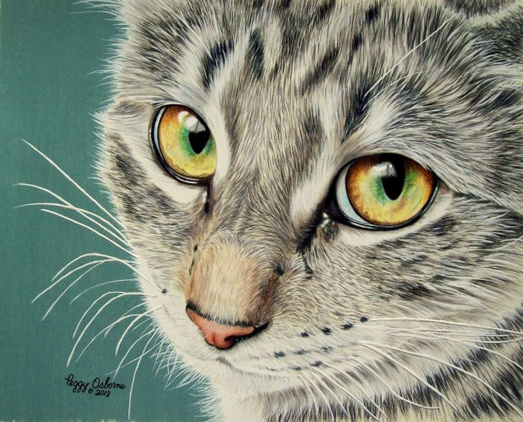 A Little Bit Shyby ~anniecanjumpTraditional Art / Paintings / Animals©2013 ~anniecanjump    This is 8x10 on Stonehenge Natural paper. Done with 99 % Prismacolor pencils and a little white acrylic for the whiskers and the wispy hairs.