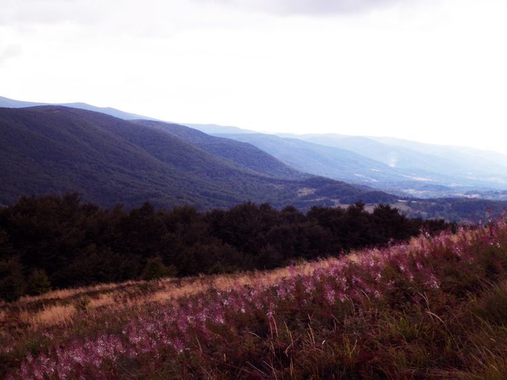 Stoki Połoniny Caryńskiej przy zejściu na Przełęcz Wyżniańską. Bieszczady Mountain Poland 2015. #Bieszczady #Mountain #PołoninaCaryńska