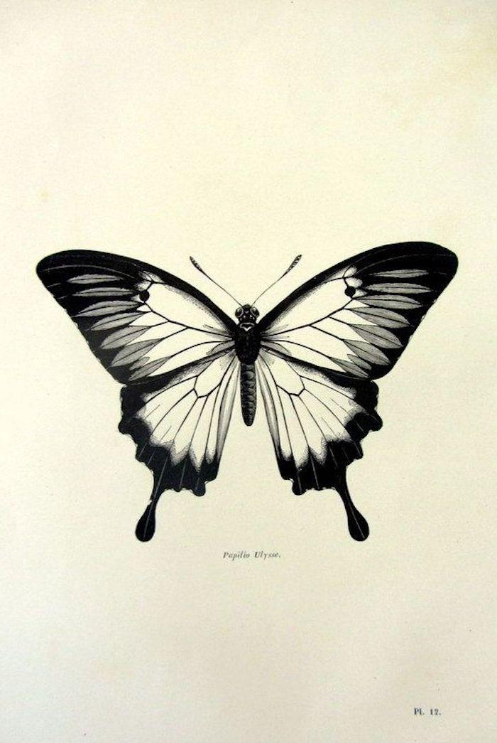 ▷ 40 + Ideen und tolle Bilder zum Thema Schmetterling Tattoo – ArchZine Germany