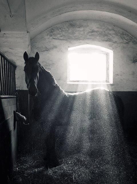 The light shining upon the barn. And the horse waiting to be rubbed by his owner.