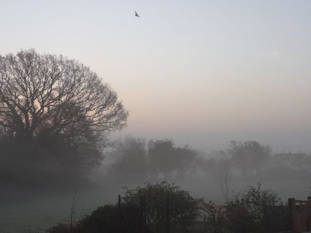 View from my back garden on a misty, magical December morning :)