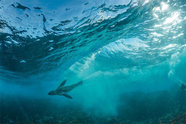 Le acque agitate del Sudafrica