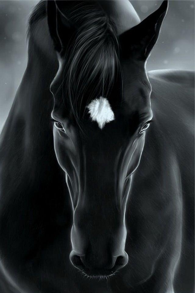 This is a beautiful black horse Este es un hermoso Caballo negro.