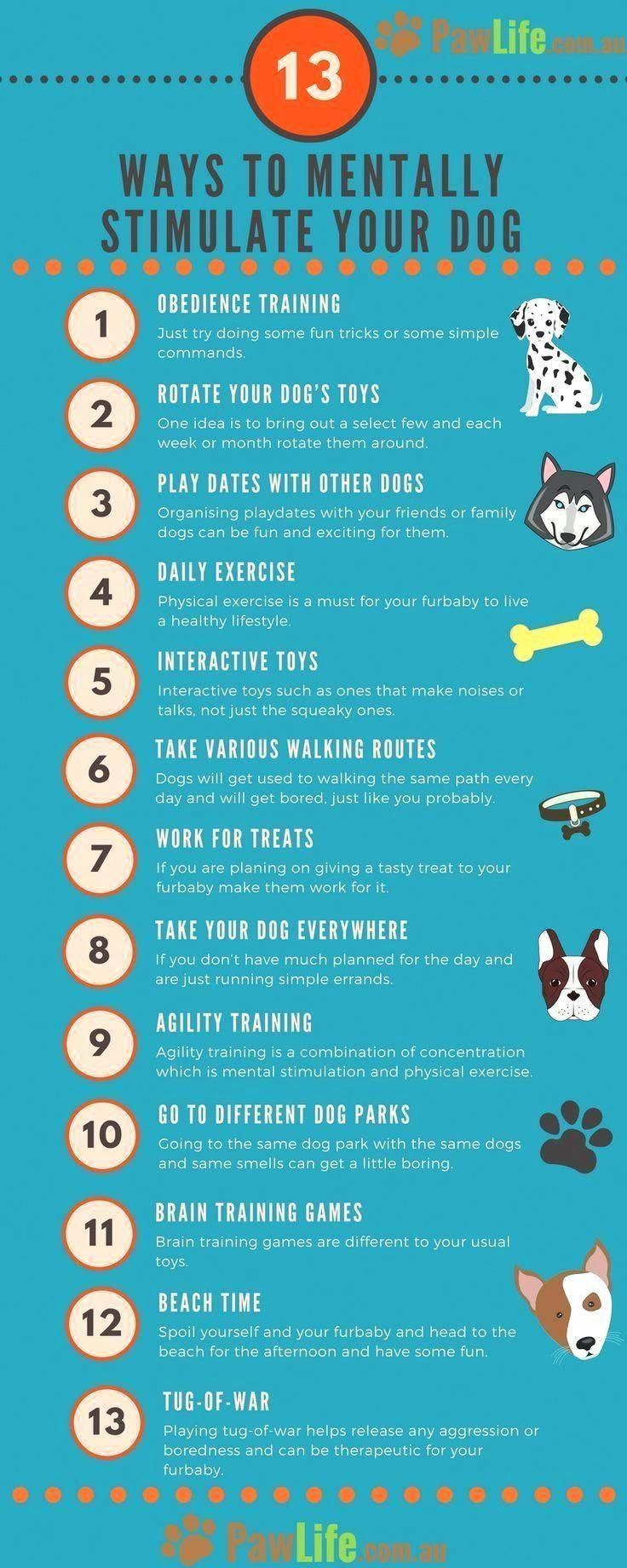 Pick A Long Term Set Of Command Words When First Teaching Your Pet