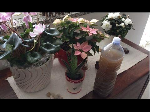 Tè di Banana, Fertilizzante di Potassio Organico Fai da Te per le nostre piante - YouTube