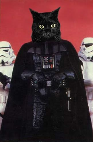 Sith Kitty, Darth Kitty, Dark Side of the Fur. Angry Kitty, Force Choke Kitty, Purr Purr Purr<------laughed too hard at pic & this little rhyme!