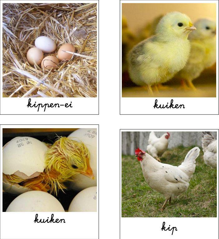 Groei van de kip, kikker en vlinder (lenteles onderbouw) - MontessoriNet