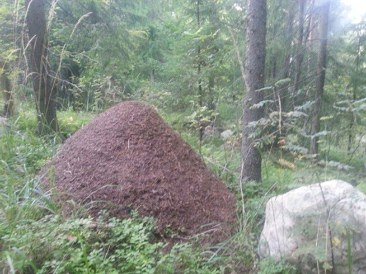 Beehive in Finnish wood. Photo by Pirjo Salo.
