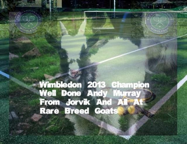 Google+ Congratulations to Andy Murray, for a terrific win today at Wimbledon 2013. You have done a nation proud. Thank you from all at Rare Breed Goats UK www.rarebreedgoats.co.uk