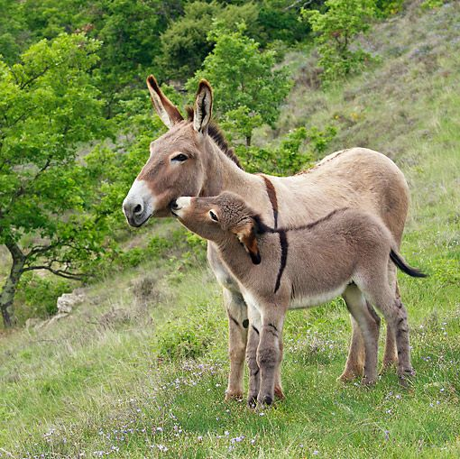 Awww...doney love..ask grandma about the neighbors Donkey on the farm. it woke me up all of the time