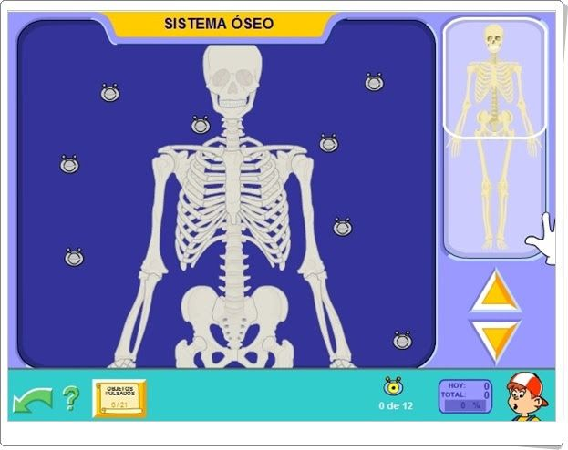 """""""Sistema óseo"""" (Ciencias Naturales de Primaria"""". Pipoclub. com."""