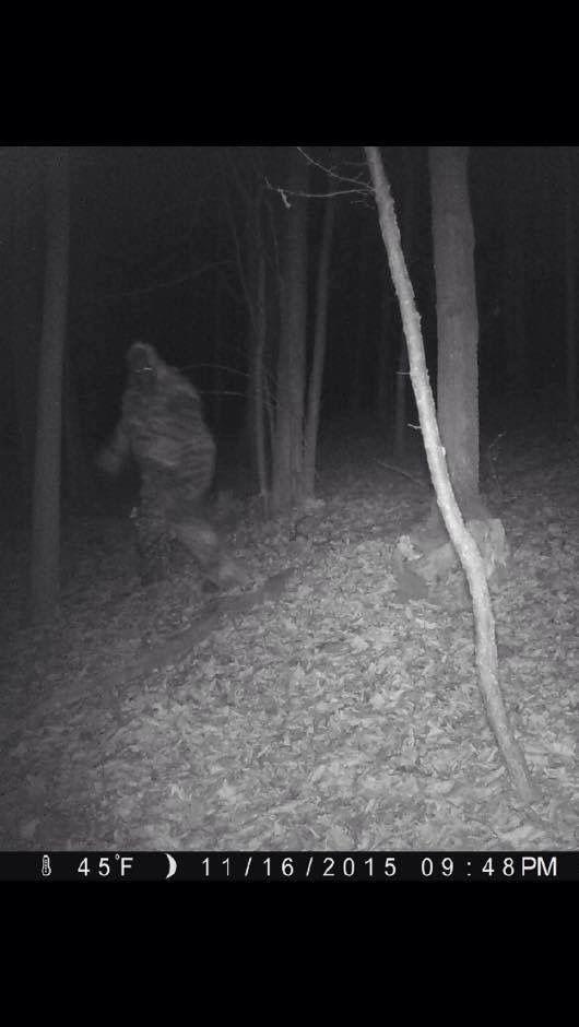 Bigfoot Sichtungen