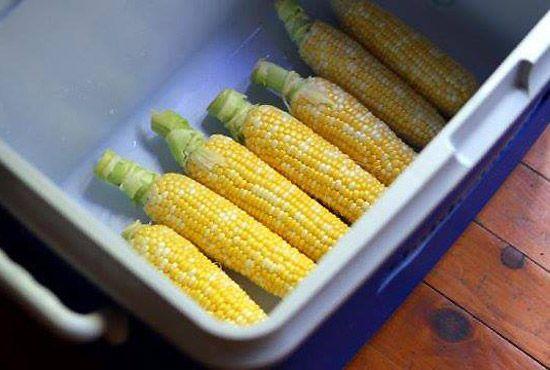 Cuire des épis de maïs en grande quantité. Cuire les épis de maïs dans une glacière. Comment? : Déposer les épis dans une glacière propre, verser le contenu de quelques bouilloires, puis fermer le couvercle. Après une vingtaine de minutes, vider l'eau et laisser le couvercle fermé. Le maïs restera chaud pendant 2 heures.