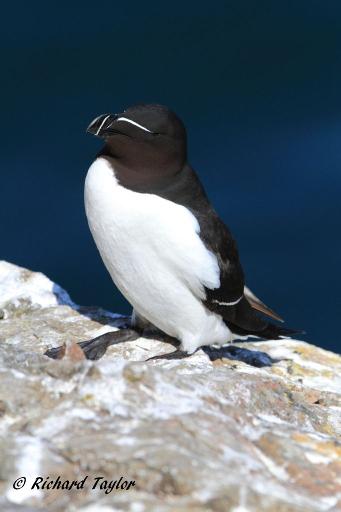 Gorgeous wildlife experience. Seabirds galore!