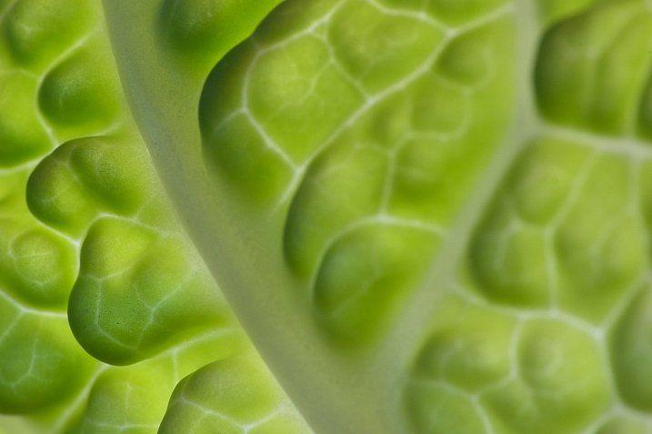 Photogenic Edibles – 25 Artistic Photos of Veggies