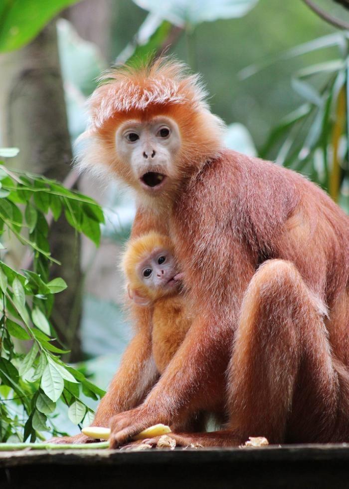 Детеныши сингапурского зоопарка (20 фото)