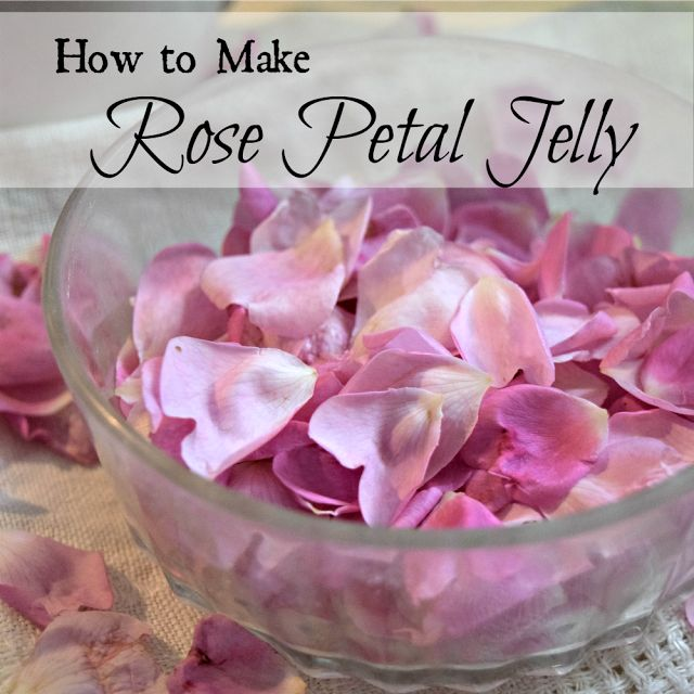 Rose petal jelly, a taste of summer.