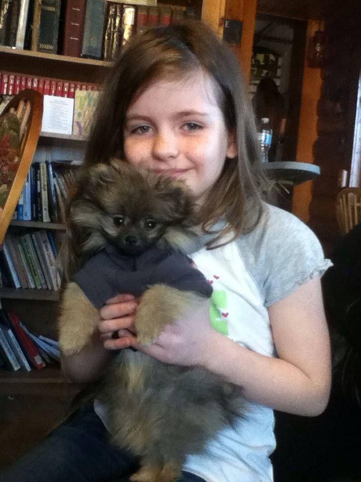 1000  ideas about pomeranian pups on pinterest