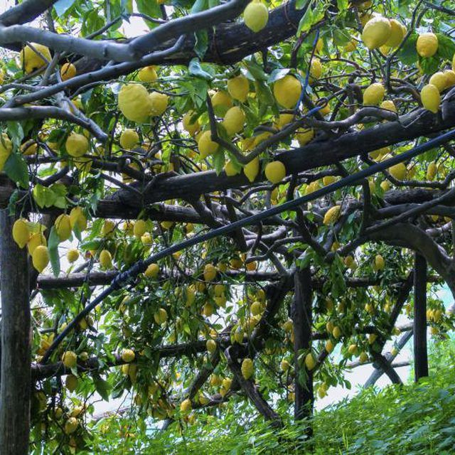 1000 ideas about root system on pinterest companion for When to transplant lemon tree seedlings