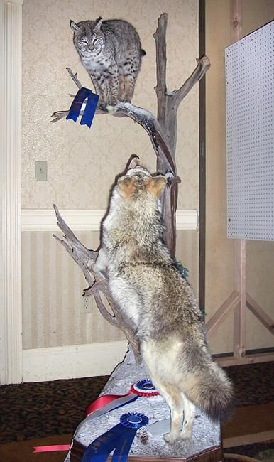 17 Best Images About Taxidermy On Pinterest Wall Mount
