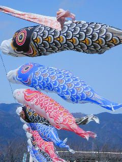 """Kodomo no hi or Japanese Children's Day is a festival originally for boys (""""tango no sekku"""") but which has been renamed for both sexes and is held on the 5th day of the 5th month.    On this day families with newborn sons fly koinobori, beautiful multi-colored carp windsocks  outside of homes to wish their sons a good future. Otoko means """"boy"""" and sekku means """"festival"""".  The festival originated in China and later became  associated with May rice planting in Japan."""
