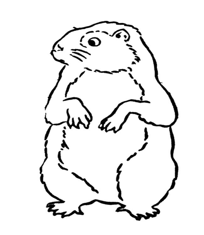 10 best images about Groundhog Day Coloring Page on Pinterest