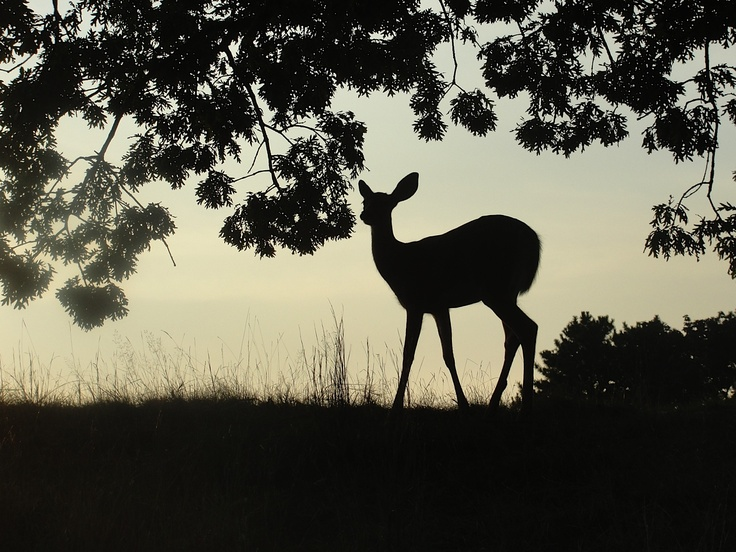 Lyme disease is the number one vector-borne disease in the United States. Animals such as deer are part of the tick life cycle.