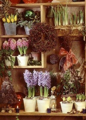 Hyazinthen bringen schon in der Winterzeit Farbe in die Wohnung. Sie sind nicht nur ein hübscher Blickfang, sondern duften auch intensiv. Wenige Pflanzen reichen aus, um einen ganzen Raum mit Hyazinthenduft zu füllen. / garten-fruehling-1.jpg
