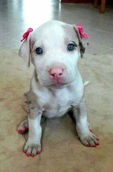 Not sure why you would paint your dog's nails but the bow is adorable on this cutie pie