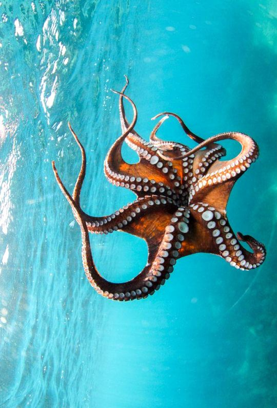 the bright and misunderstood world of the cephalopods Here's how one store is working to break down the stigma.